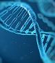 AllerGen investigators contribute to asthma genetics discovery
