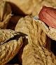 New genetic clue to peanut allergy